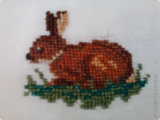 это кролик фото 1