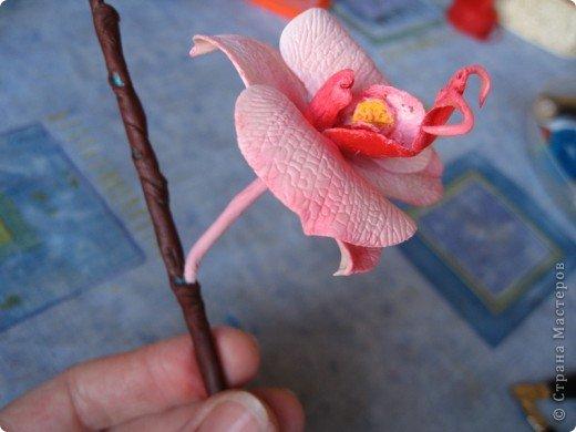 Мастер-класс Лепка МК орхидея Фаленопсис Фарфор холодный фото 37