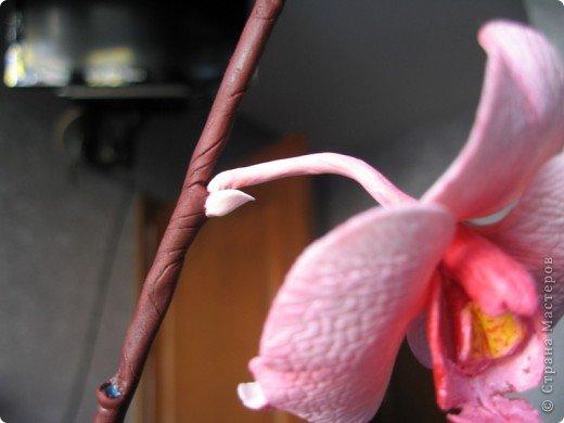 МК орхидея Фаленопсис фото 44