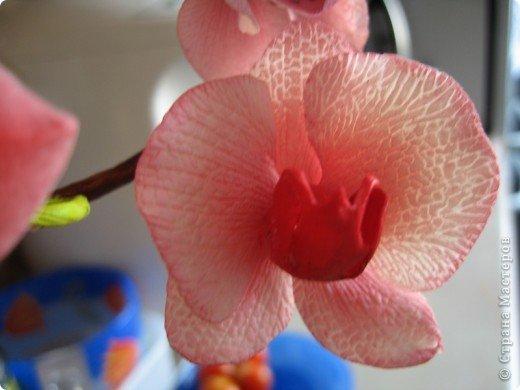 Мастер-класс Лепка МК орхидея Фаленопсис Фарфор холодный фото 1