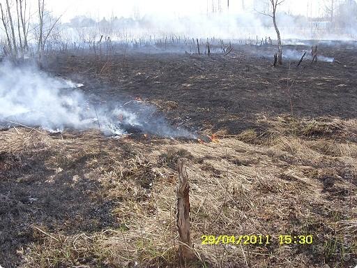 """Каждый год """"умные""""люди поджигают сухую траву на поле... фото 1"""