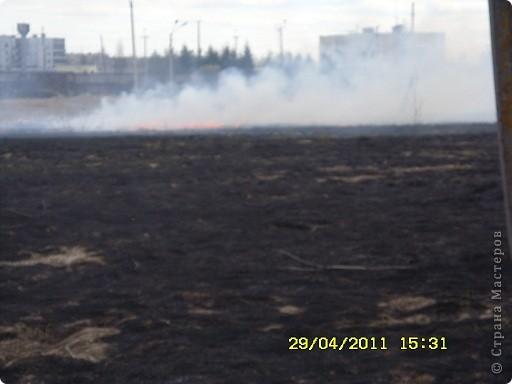 """Каждый год """"умные""""люди поджигают сухую траву на поле... фото 2"""