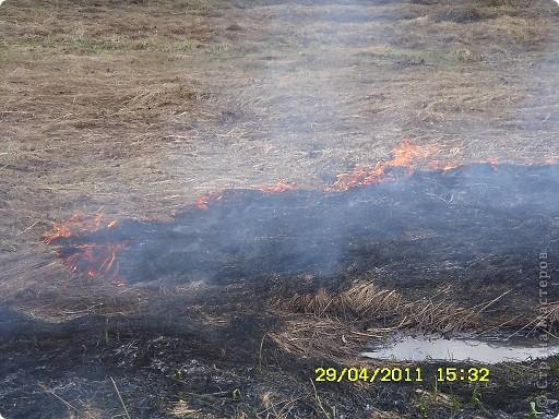 """Каждый год """"умные""""люди поджигают сухую траву на поле... фото 3"""