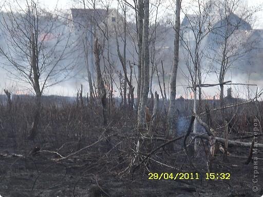 """Каждый год """"умные""""люди поджигают сухую траву на поле... фото 4"""