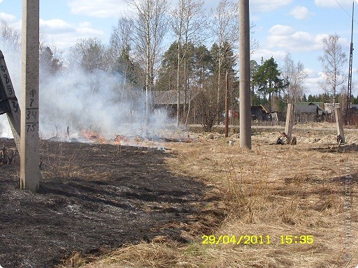 """Каждый год """"умные""""люди поджигают сухую траву на поле... фото 5"""