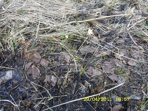 """Каждый год """"умные""""люди поджигают сухую траву на поле... фото 7"""