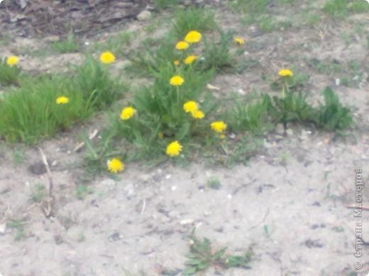 весенний аромат фото 2