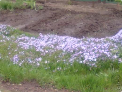 весенний аромат фото 4