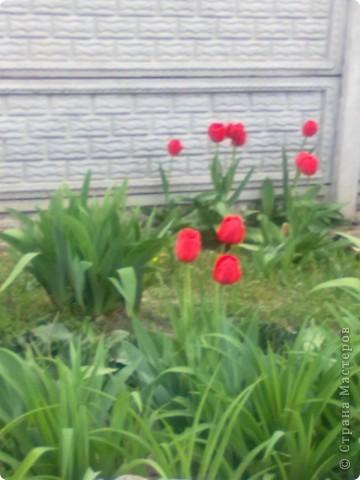 весенний аромат фото 1