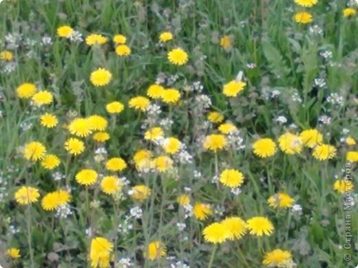 весенний аромат фото 5