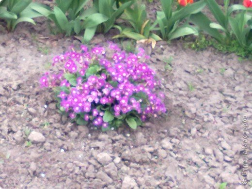весенний аромат фото 6