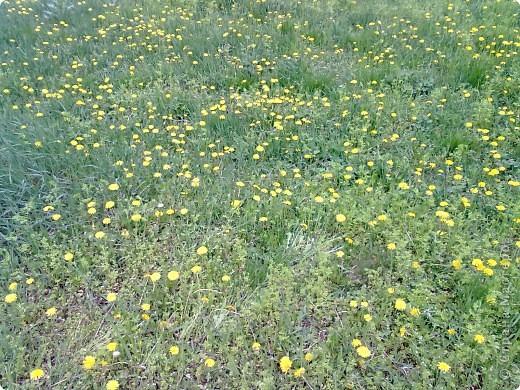 весенний аромат фото 7