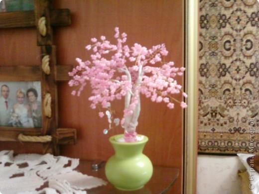 Сакура фото 4