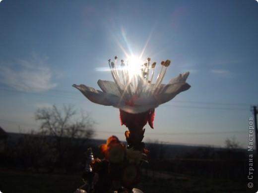 У нас весна!!!(продолжение) фото 7