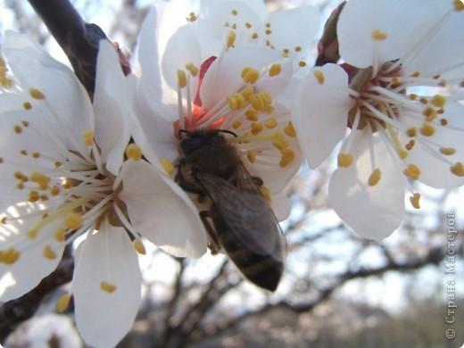 У нас весна!!!(продолжение) фото 5