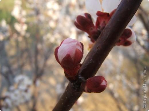 У нас весна!!!(продолжение) фото 17