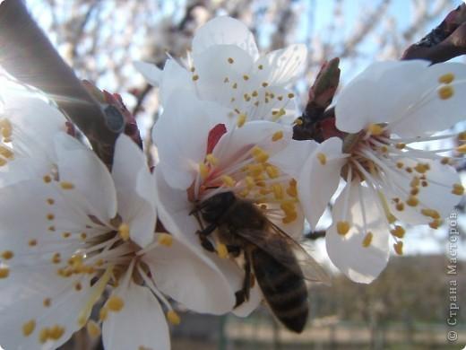 У нас весна!!!(продолжение) фото 4