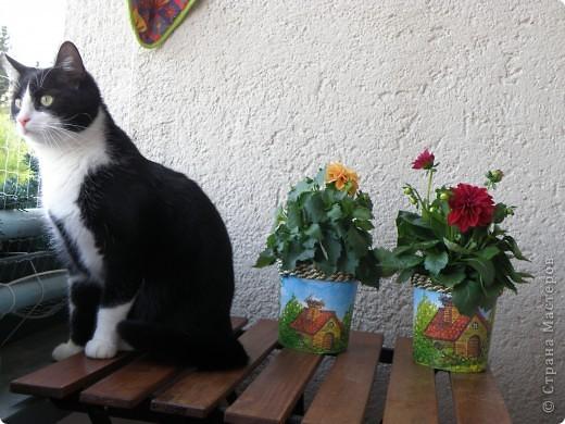 Прикупила я три цветочка, а горшочков не было, пришлось на скорую руку творить. Вот этот первый. фото 4