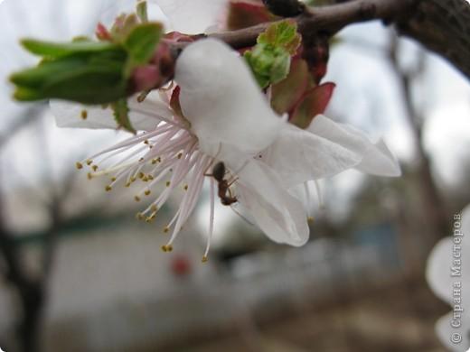 Весна окончательно вступила в свои права. Зацвели абрикосы. Теплое солнышко и высокое, звонкое весеннее небо никого не оставляет равнодушным. фото 15