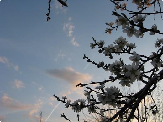 Весна окончательно вступила в свои права. Зацвели абрикосы. Теплое солнышко и высокое, звонкое весеннее небо никого не оставляет равнодушным. фото 1