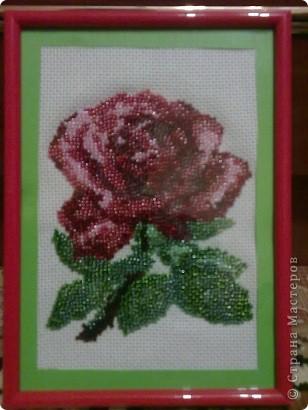 роза....