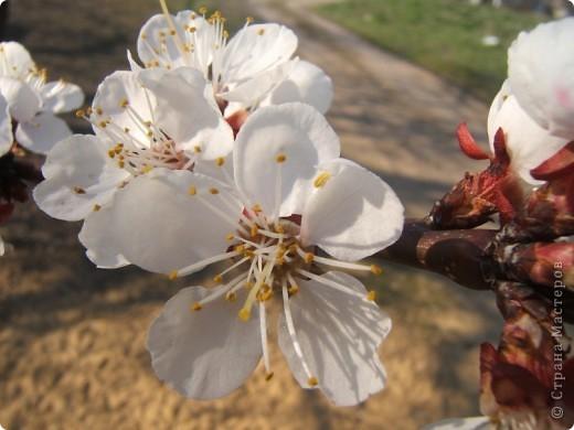 У нас весна!!!(продолжение) фото 20