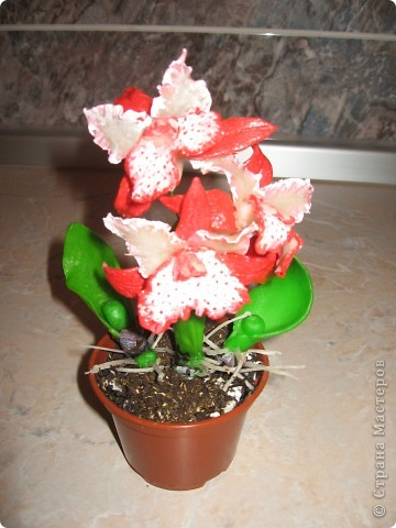 Мои первые орхидеи. фото 1