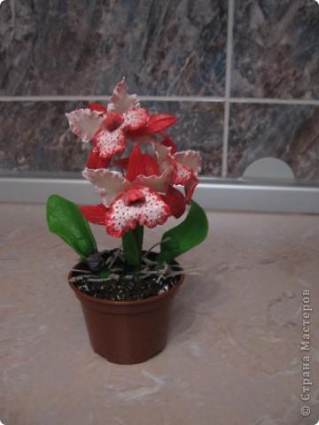 Мои первые орхидеи. фото 3