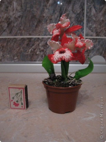 Мои первые орхидеи. фото 2