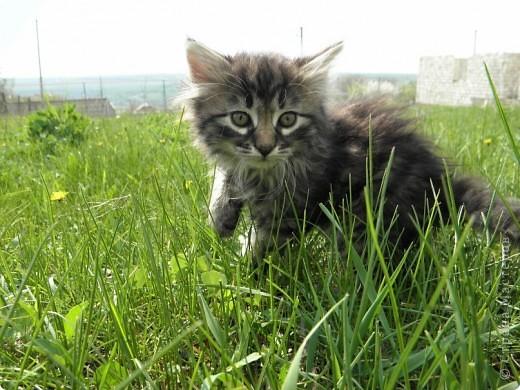 Котики фото 7