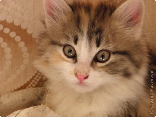 Котики фото 9