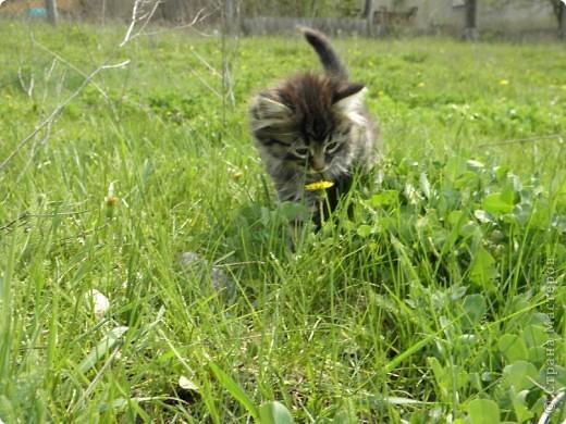 Котики фото 4