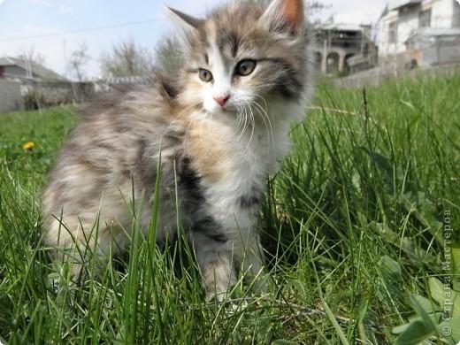 Котики фото 6