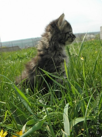 Котики фото 8