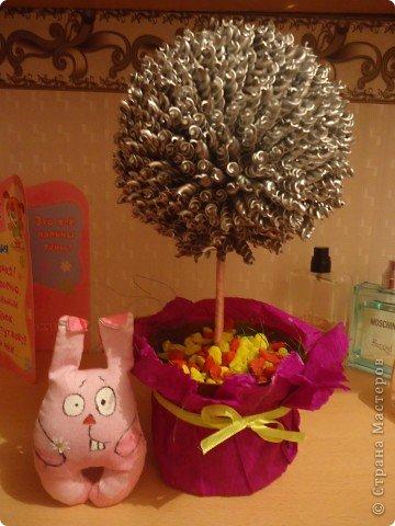 макаронное дерево фото 2