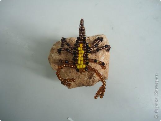Скорпион фото 3