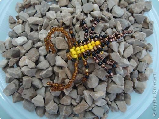 Скорпион фото 1