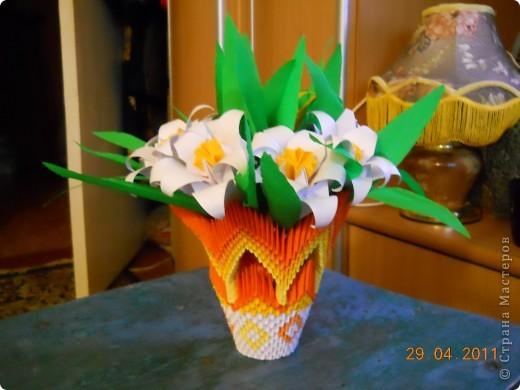 Мои лилии фото 3