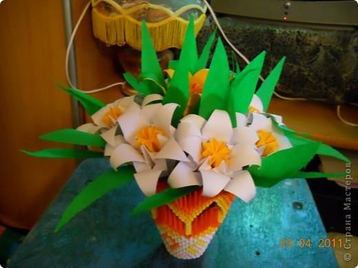 Мои лилии фото 1