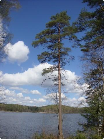 В Смоленской области на территории удивительно красивого национального парка Смоленское поозерье существует огромное количество памятных мест, связанных с героизмом советских  солдат и партизан. В одном из таких мест я и предлагаю вам сегодня побывать. фото 17