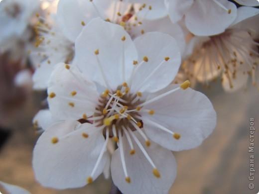 У нас весна!!!(продолжение) фото 19