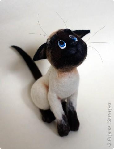 Эту кошечку зовут Сима), скоро она переедет жить к моей подруге в Россию) фото 7