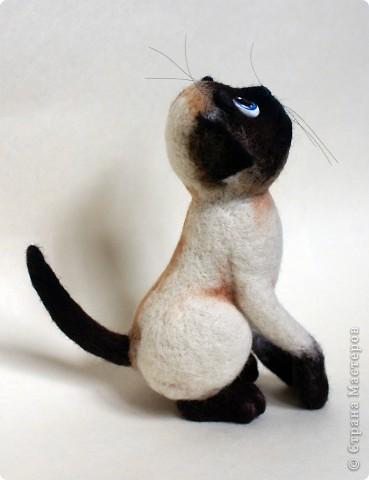 Эту кошечку зовут Сима), скоро она переедет жить к моей подруге в Россию) фото 9