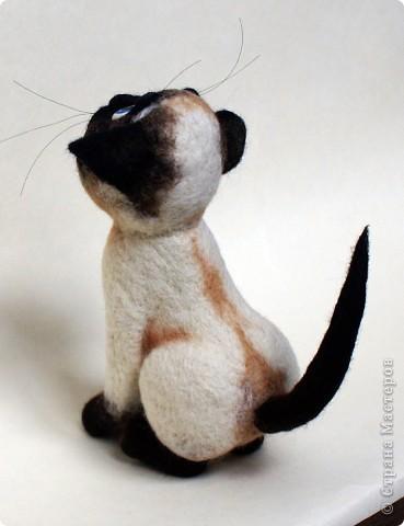 Эту кошечку зовут Сима), скоро она переедет жить к моей подруге в Россию) фото 10