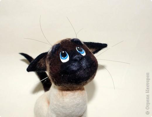 Эту кошечку зовут Сима), скоро она переедет жить к моей подруге в Россию) фото 8