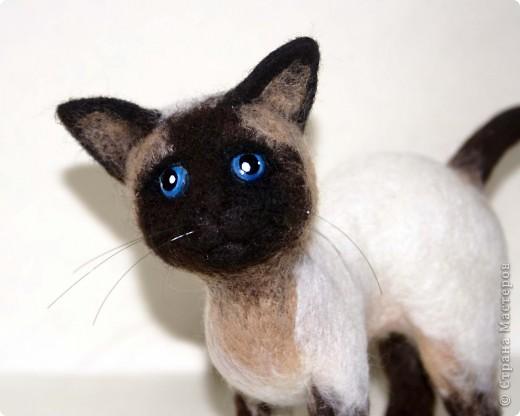 Эту кошечку зовут Сима), скоро она переедет жить к моей подруге в Россию) фото 2