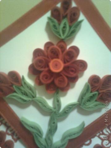 червено цвете фото 2