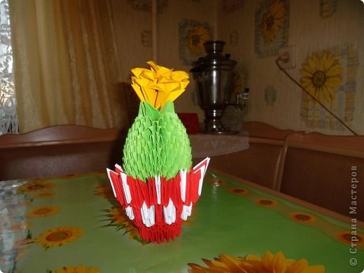 Любимый кактус