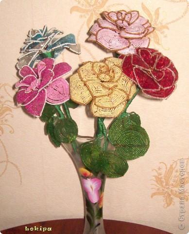 Вот такие у меня есть вечно цветущие розы. фото 1