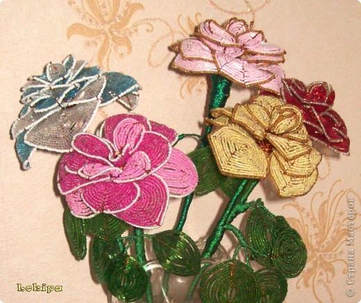Вот такие у меня есть вечно цветущие розы. фото 2